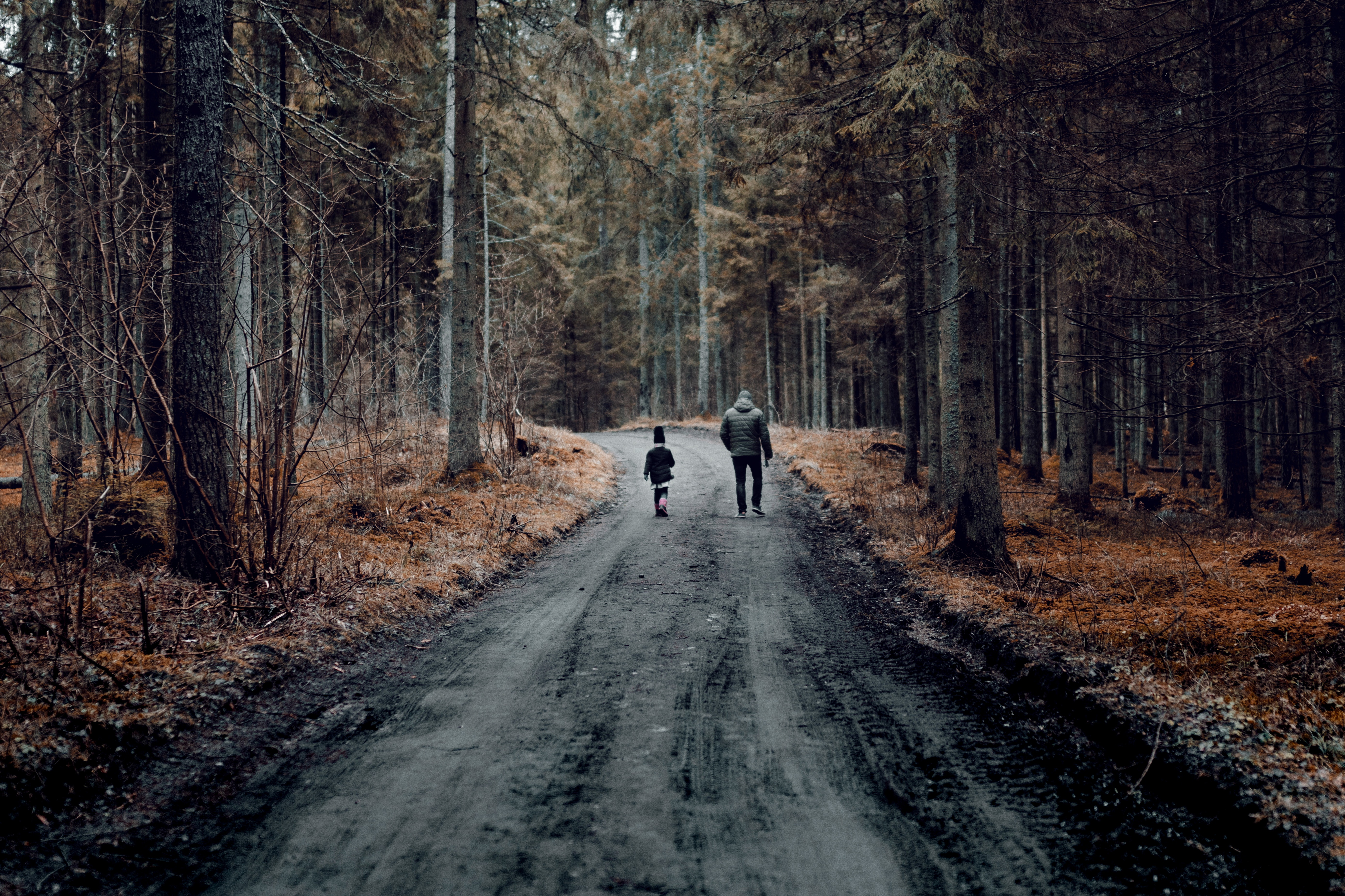 Child and adult walking in the forest