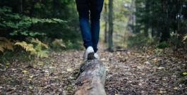 Person walking across a log in the forest